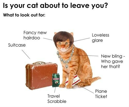 is-your-cat-about-to-leave-you