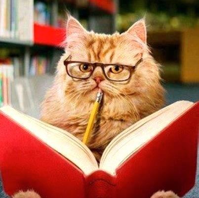 Studious Cat Gif