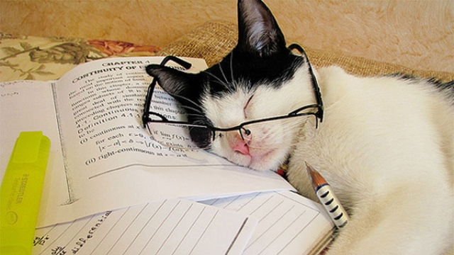 cat-reading-tumblr